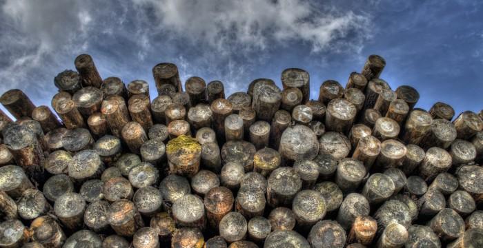 מחסן עצים