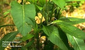 יתרונות צמחי מרפא להרזיה