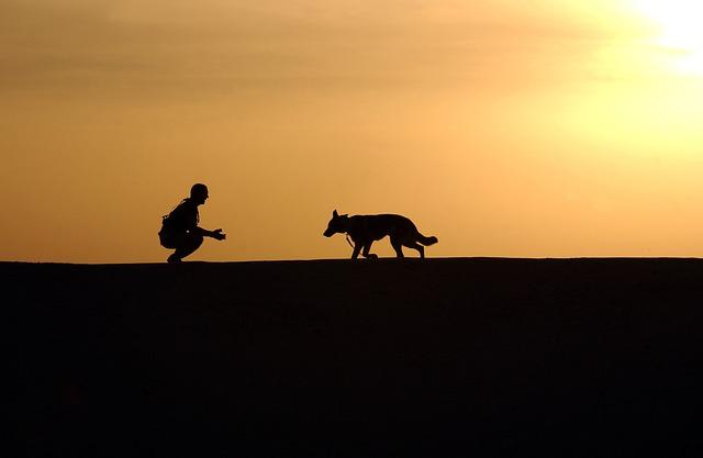 אילוף כלבים בקריות